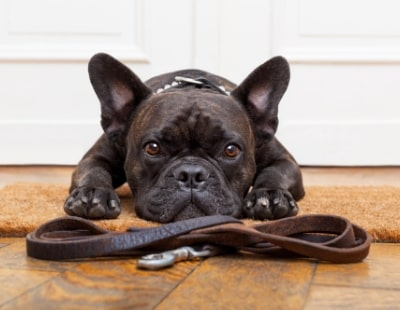 Pet-friendly tenancies could make landlords go walkies -  claim