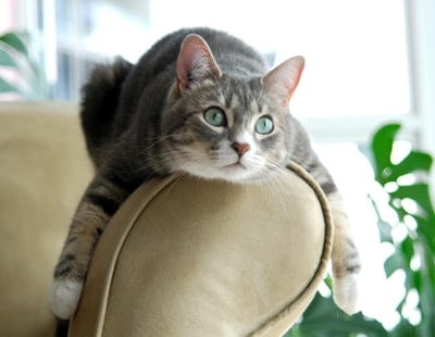 Pets allowed in rental development as momentum grows for reform