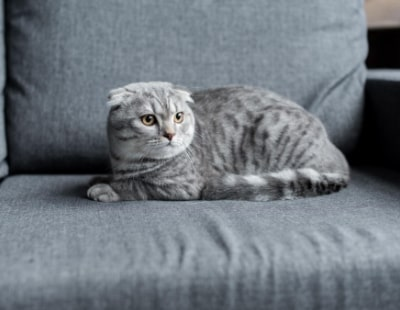 Pet referencing service launches - but letting agents must pay