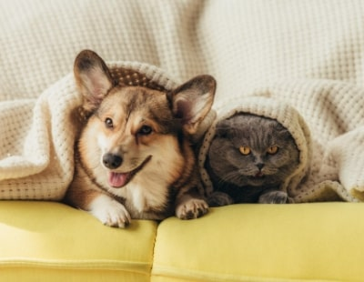 Far more tenants keep pets than admit it, 'left items' suggest