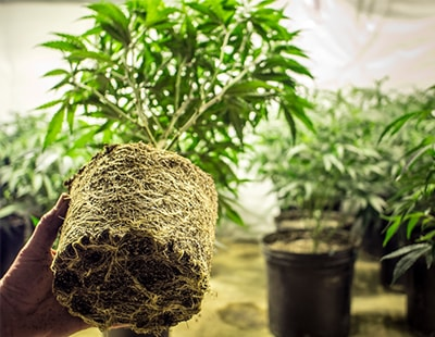Research smokes out worst areas for cannabis farming in rented flats