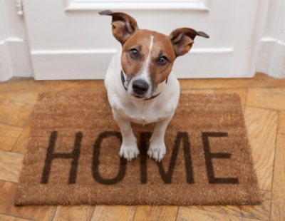 Pets in letting properties pushed by Build To Rent operator