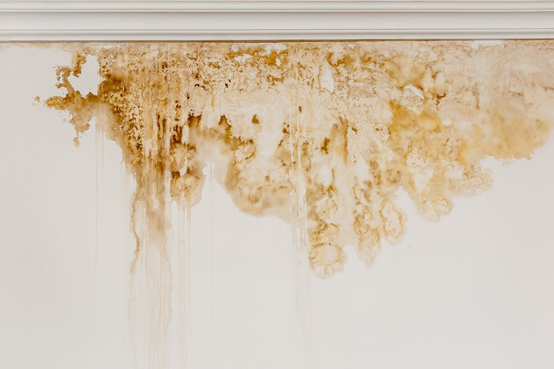 Don't let damp and mould damage your property